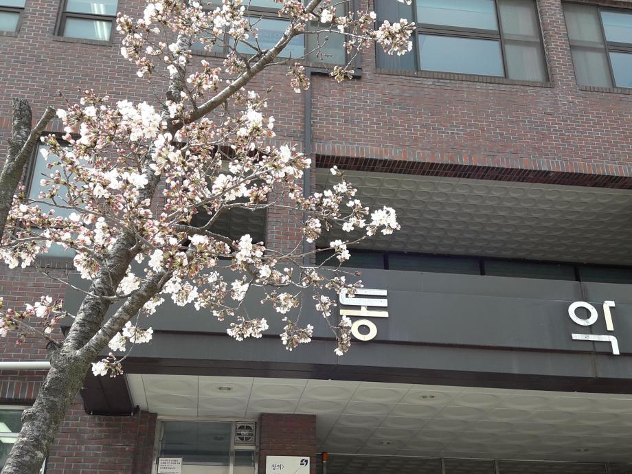 동악관 앞 벚꽃 이미지