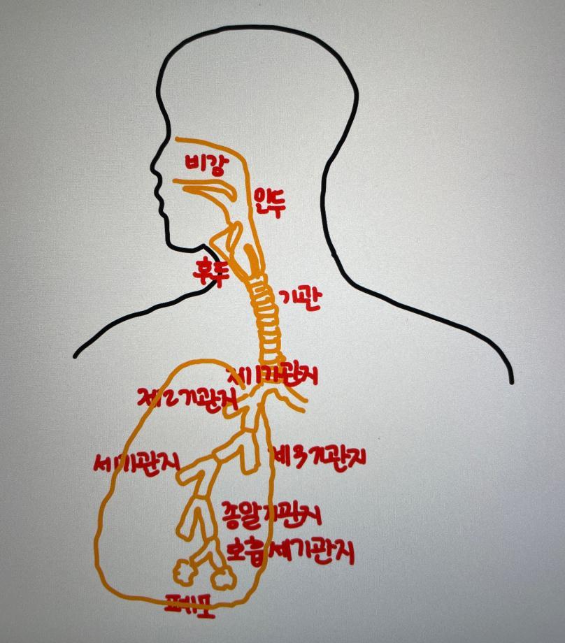 언어기관의 해부와 생리 수업 이미지