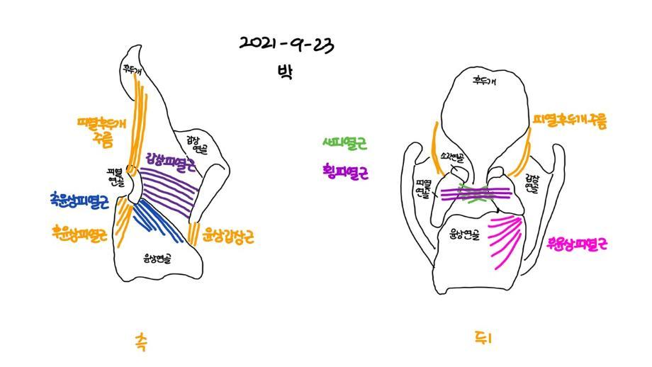 즐거운 언어기관해부생리 수업1 이미지