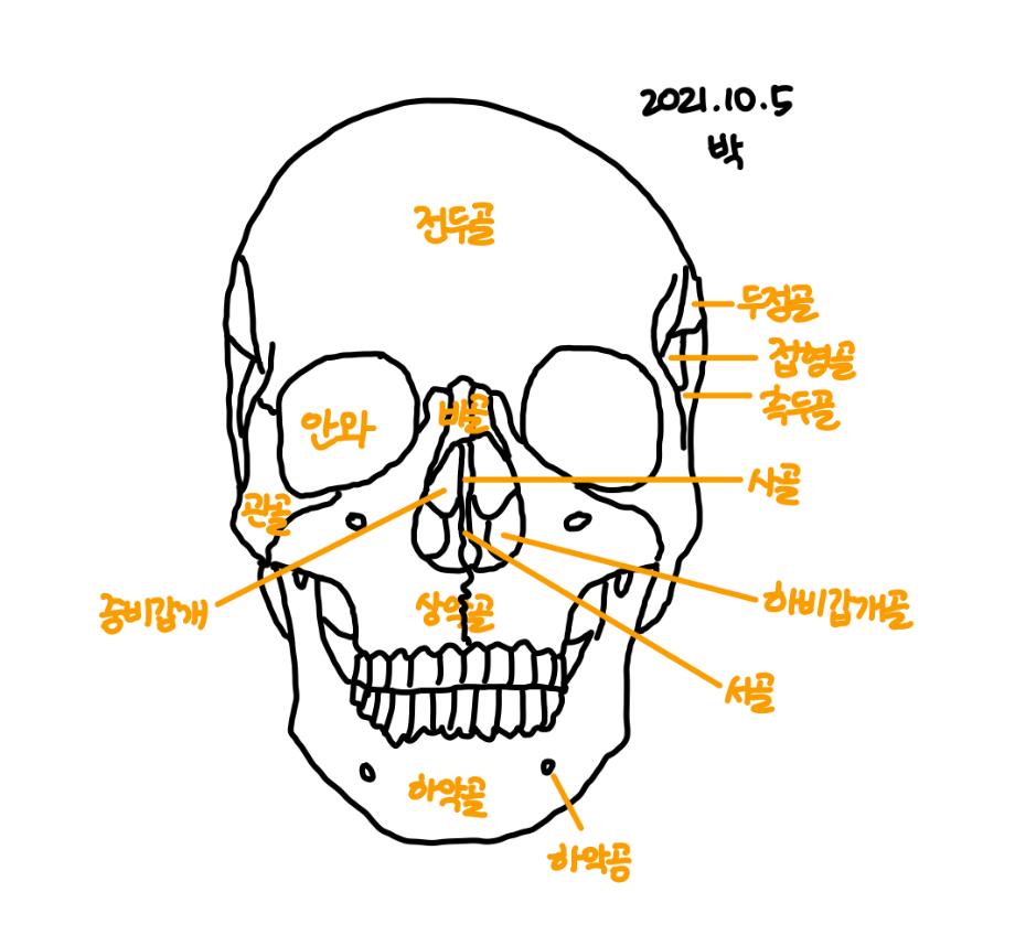 언어기관해부생리 수업 이미지